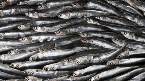 تاثیر خوردن ماهی بر سلامت دندان و لثه