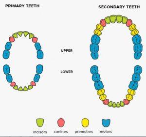 نمودار دندان